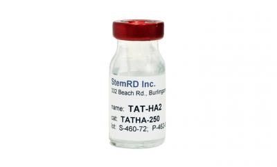 TAT fused to HA2